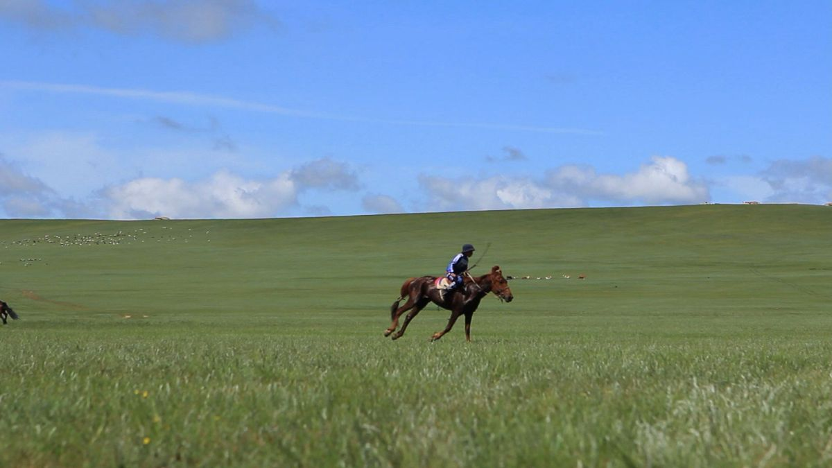 Happy naadam horse racing live from ub - Theusd tiny house the shortest way to freedom ...